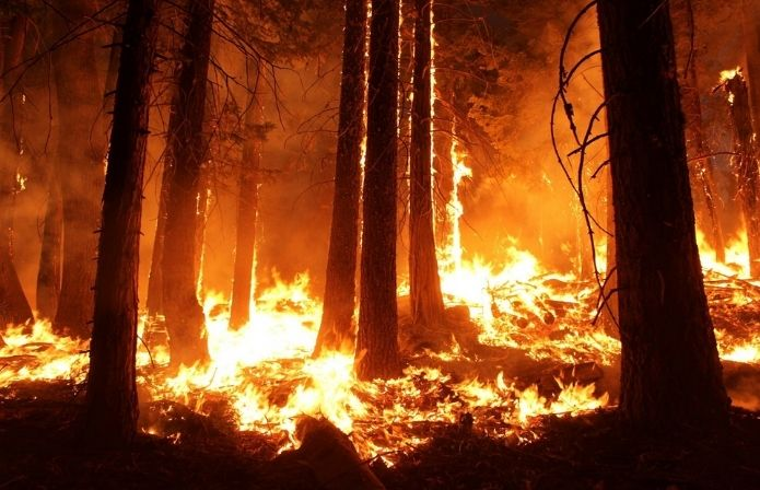 45 Forest Fires in 24 hours! Why are Indian Jungles burning?